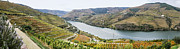 Winery Photos - Terraced Vineyards in Autumn by Oscar Gutierrez