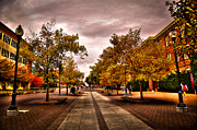 Landscapes Photography - Terrell Mall on the Washington State Campus by David Patterson