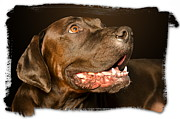 Tex The Dog Print by Harold Bonacquist