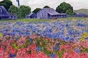 Bluebonnets Prints - Texas Bluebonnet Farm Print by Merri aka Cathy Friesenhahn