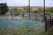 Debbie Karnes - Texas Bluebonnet Welcome...