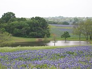 Ellen Howell - Texas Bluebonnets and...