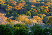 Color Green Posters - Texas Forest Mountain in Fall Poster by Linda Phelps