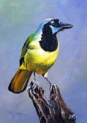 Bird Of Prey Art Paintings - Texas Green Jay by Mary Dove