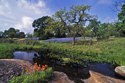 Picturesque Art - Texas Hill Country - FS000056 by Daniel Dempster