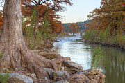Photos Of Autumn Prints - Texas Hill Country Images - Cypress of Pedernales Falls 1 Print by Rob Greebon