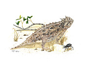 Texas Painting Originals - Texas horned lizard by Cindy Hitchcock