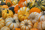 Photos Of Autumn Prints - Texas Images - Fall Colors and October Pumpkins Print by Rob Greebon