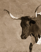Longhorn Digital Art Posters - Texas Longhorn #6 Poster by Betty LaRue
