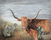 Longhorn Drawings Posters - Texas Longhorn and Cactus Poster by Dana Spring Parish