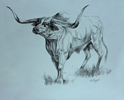 Texas Drawings - Texas Longhorn by Derrick Higgins