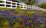 Texas Spring Print by Brian Kerls