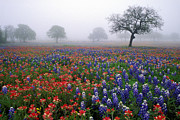 Indian Art - Texas Spring - FS000559 by Daniel Dempster