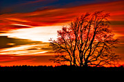 Tree Pyrography Metal Prints - Texas Sunset Metal Print by Darryl Dalton