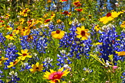Bandera Framed Prints - Texas wildflowers Framed Print by John Babis