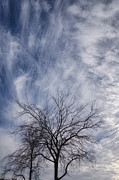 Fort Worth Texas Photos - Texas Winter Clouds by Joan Carroll