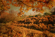 David Birchall - Textured Autumn