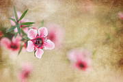 Textured Blossoms Print by Terry Ellis