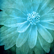 Meirion Matthias - Textured Dahlia In Blue