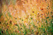 Kim M Smith - Textured fall meadow