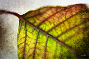 Leaf Abstract Framed Prints - Textured Leaf Abstract Framed Print by Scott Pellegrin