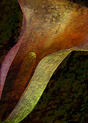 Calla Lilly Prints - Textured Lilly Print by Bruce Bain