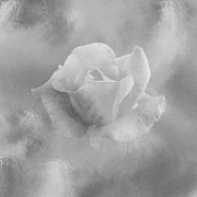 Lynn Bolt - Textured Rose