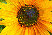 Jeanette Brown - Textured Sunflower