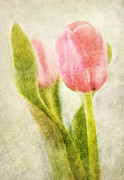 Floral Prints Digital Art Framed Prints - Textured Tulip Framed Print by Natalie Kinnear