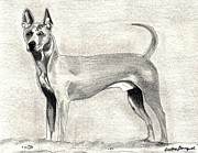 Thai Drawings - Thai Ridgeback Dog by Olde Time  Mercantile