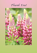 Blank Greeting Card Posters - Thank You Lupine Pastels Poster by Michael Peychich