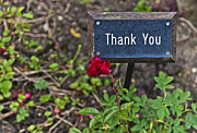 English Rose Posters - Thank you Poster by Maj Seda