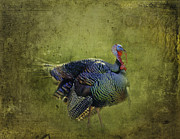 Plump Framed Prints - Thanksgiving Is Coming Better Run Better Run Framed Print by Diane Schuster