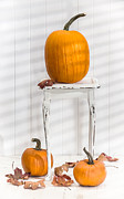 Orange Pumpkins Prints - Thanksgiving Pumpkin Display Print by Christopher and Amanda Elwell