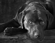Dog Photo Prints - That Loving Gaze Print by Larry Marshall