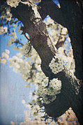 Blooming Trees Posters - That March Poster by Laurie Search