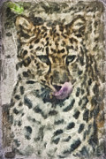 Leopard Prints - That Was Delicious Print by Trish Tritz