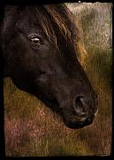 Ponies Digital Art - that Wild Look by Angel  Tarantella