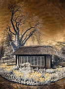 Thatched Cottage Posters - Thatched Cottage Poster by Steve Zimic
