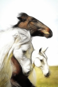 Brown Tones Posters - The 3 Spirit Horses Poster by Steve McKinzie