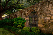 Texas Revolution Prints - The Alamo Garden Print by Tricia Marchlik
