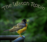 Robin Art - The American Watch Robin by LeeAnn McLaneGoetz McLaneGoetzStudioLLCcom
