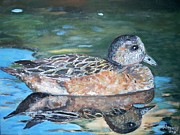 Teresa Dominici - The American Wigeon