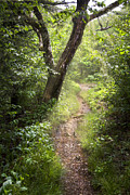Rock Spring Trail Prints - The Appalachian Trail Print by Debra and Dave Vanderlaan
