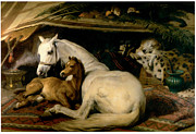 Foal Framed Prints - The Arab Tent Framed Print by Sir Edwin Landseer