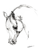 Animals Drawings - The Arabian Horse Sketch by Angel  Tarantella