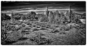 Carefree Arizona Art - The Arizona Landscape by David Patterson