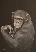 Primate Drawings - The Arm Wrestler - Chimpanzee by Jill Parry