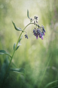 Wildflower Photos - The Arrival Of Spring by Priska Wettstein