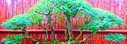 Bamboo Fence Prints - The Art of Bonsai Print by Ann Johndro-Collins